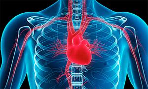 Какие анализы крови назначает кардиолог при thumbnail